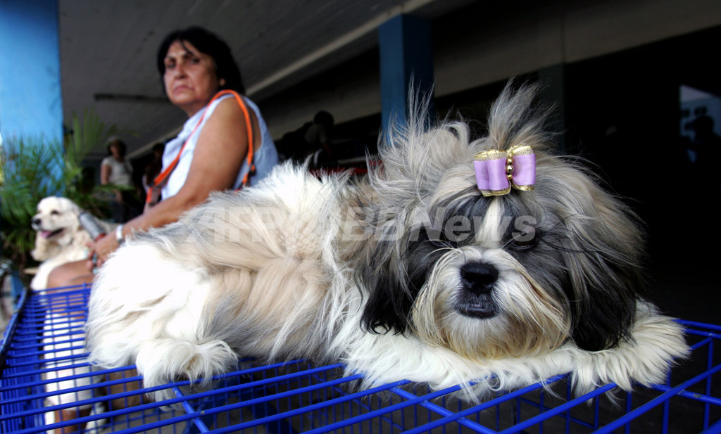 イヌにかまれて感染症に、カナダ女性が腕と両足失う