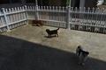 消費量増える犬肉、海外の抗議が裏目に?中国