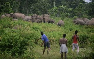 野生のゾウに襲われ中国人技師死亡、インド
