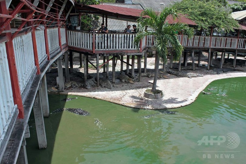 女性がワニ飼育池に飛び込み自殺、タイ