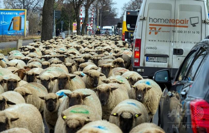 羊600頭が大移動、踏切や幹線道路などの難所も 独首都