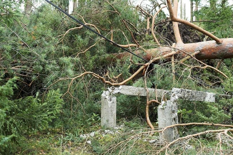 ポーランドで暴風雨、キャンプ中の少女ら5人倒木で死亡