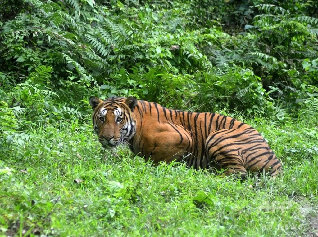 脊椎動物の個体数、人間の活動で44年間に6割減 WWF調査