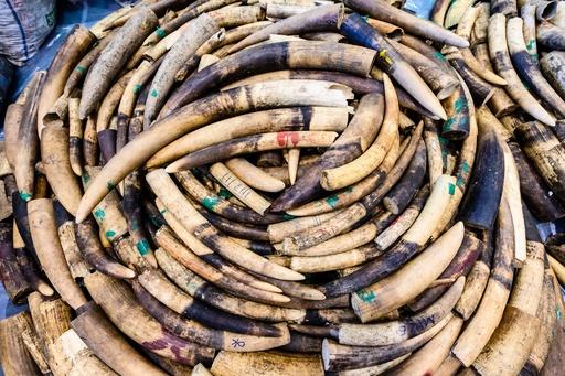 ヤフージャパン、象牙製品取引を全面禁止へ 11月から