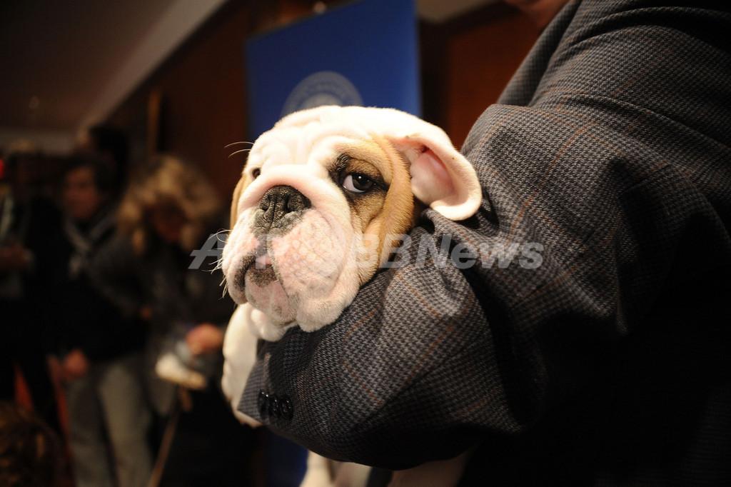 アメリカンケンネルクラブが12年の人気犬種を発表