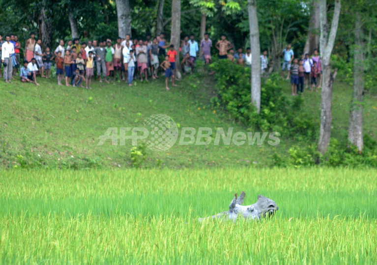 絶滅危機のアジアサイ、個体数増加で合意 国際会合