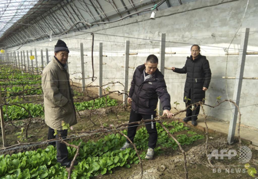 農業 コロナ 支援