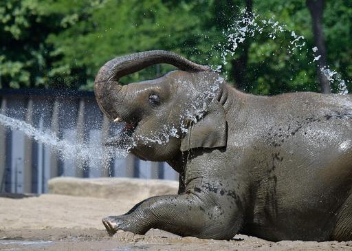 暑くてたまらない! 水浴びや氷のおやつで涼をとる動物たち 独