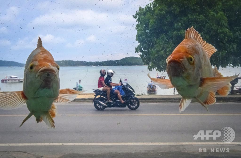 【今日の1枚】魚が空中を泳ぐタイのビーチ