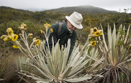 地雷原も越えて…命懸けの植物採取、コロンビアの植物学者