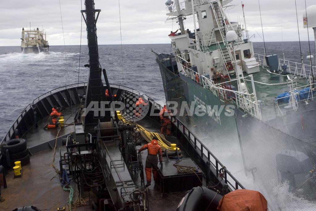 今季の調査捕鯨終了、妨害で捕獲数は目標の3分の1