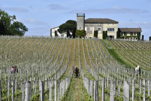仏警察、中国企業所有のワイン醸造所10軒を差し押さえ 脱税などの容疑