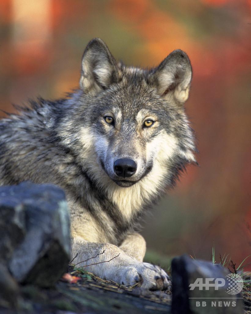 トランプ政権、種の保存法の規制を緩和