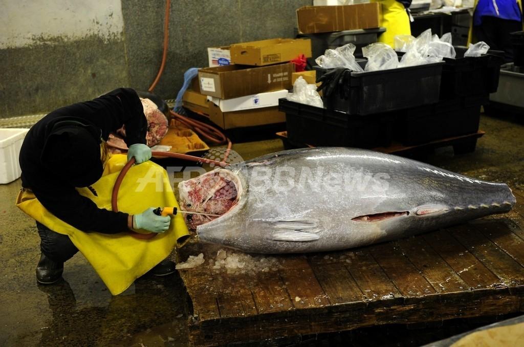太平洋クロマグロ、幼魚の漁穫量削減で合意