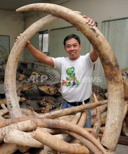 押収した象牙5トンを粉砕へ、フィリピン