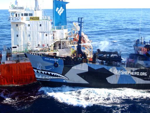 豪政府、日本の捕鯨船団とシー・シェパードを上空から監視