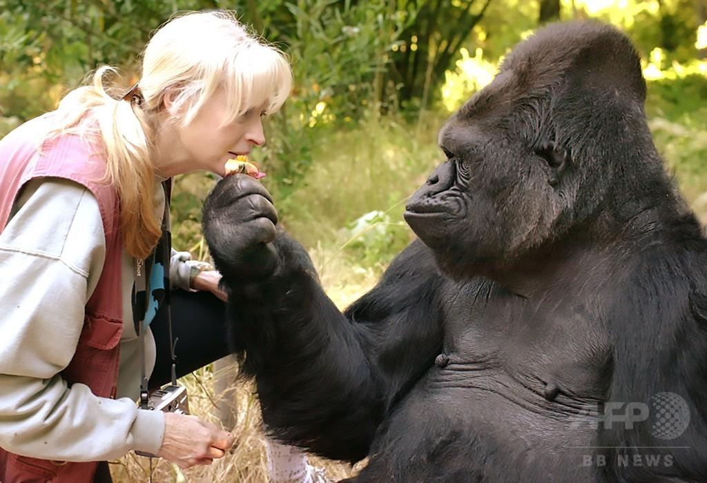手話のできるゴリラ「ココ」死ぬ 種超えた交流が話題に