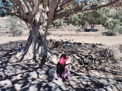 「妻じゃなく奴隷だった」 内戦下のイエメン、増える児童婚