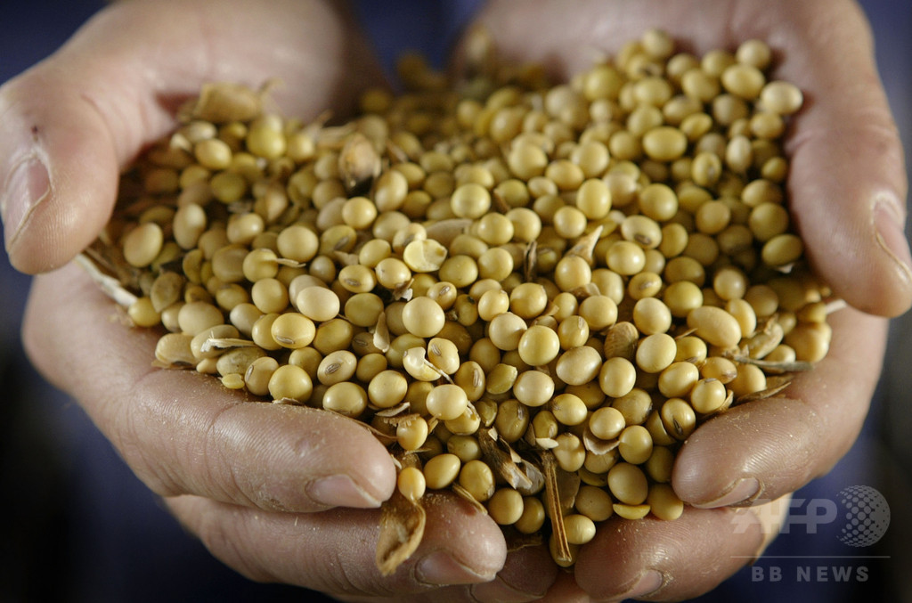 遺伝子組み換え作物、「食べ物として危険」の証拠なし 米研究