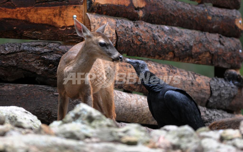 愛を確認中?ホンジュラス動物園のほのぼの日常