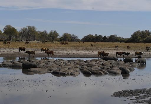 水を求めて泥地に集まる動物たち…干ばつのボツワナ