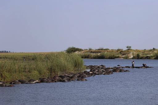 ボツワナでバッファロー400頭超が水死、ライオンに追われ川に殺到か