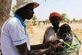 南スーダン飢饉、湿地に隠れ水生植物で飢えしのぐ