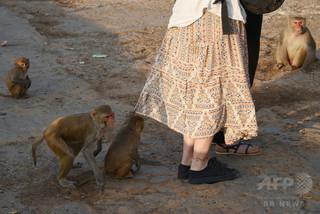 タージマハルでサルが観光客襲撃 警察が注意呼びかけ インド