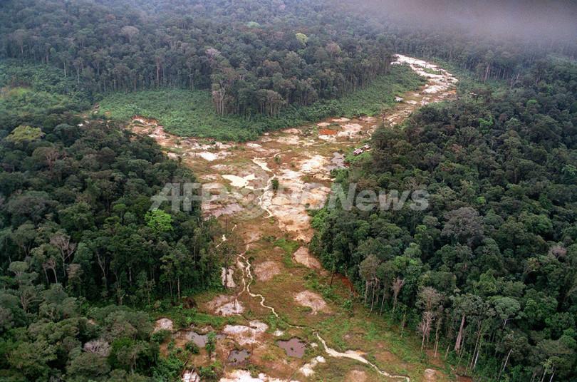 アマゾン熱帯雨林の60%、2030年までに減少の危機