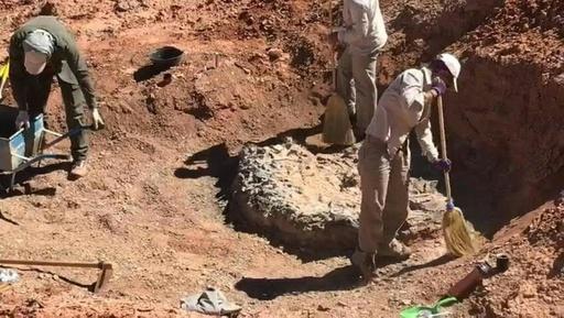 動画:2億2000万年前の恐竜の化石を発見、アルゼンチン