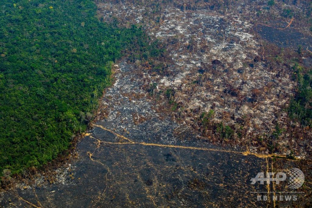 原生熱帯林「6秒ごとにサッカー場1面分」消失 19年調査