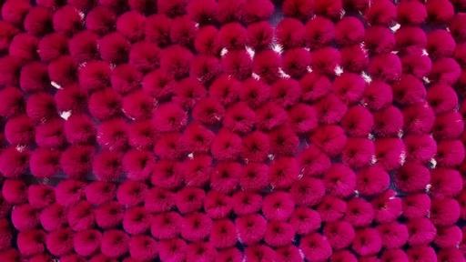 動画:ベトナムの「線香村」がピンク一色に 旧正月準備ピーク