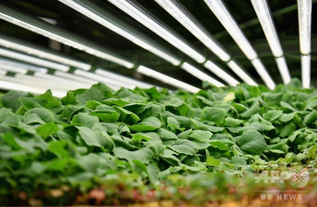 グーグルやアマゾンのベゾス氏も…IT業界が支える「都市農業」
