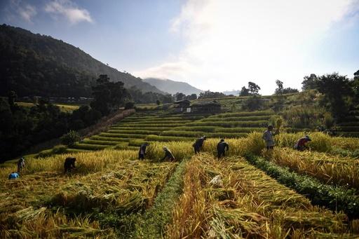 農薬と借金まみれの農業にさよなら エコな農法でよみがえったタイの村