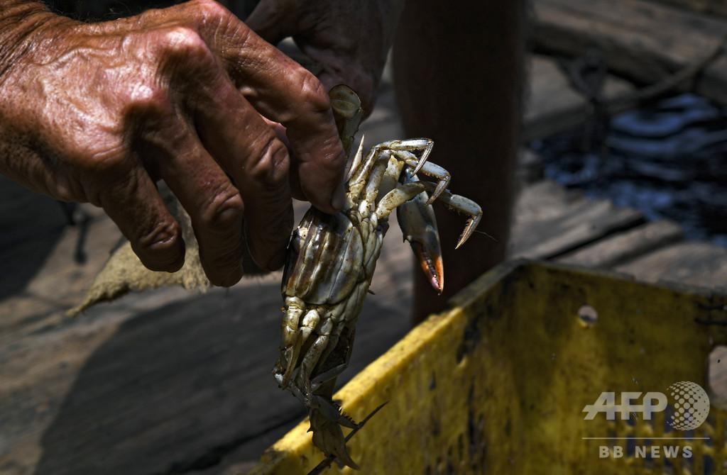 経済破綻が引き起こした湖の原油汚染、人々の暮らし脅かす ベネズエラ