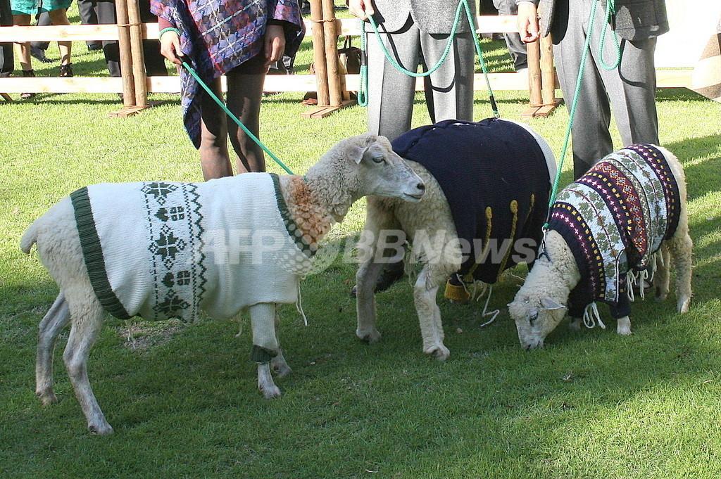 「キャンペーン・フォー・ウール」日本で開催、羊と人間のファッションショーも