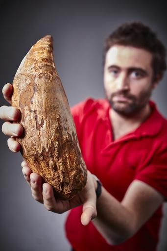 古代のヒゲクジラ類、肉食動物のような鋭利な歯を持つ 研究 写真3枚 ...