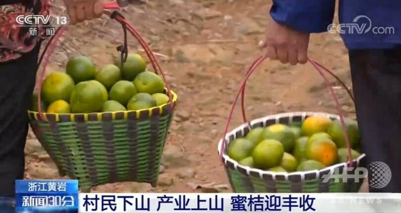 国際ニュース:AFPBB News中国各地で実りの秋迎える、畑は黄金色の輝き