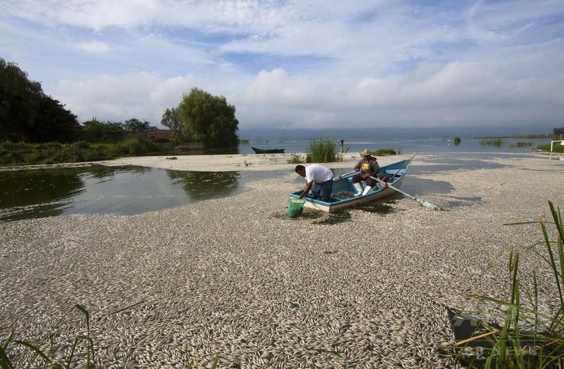 メキシコの潟湖に魚の死骸50トン、今年4度目の大量死