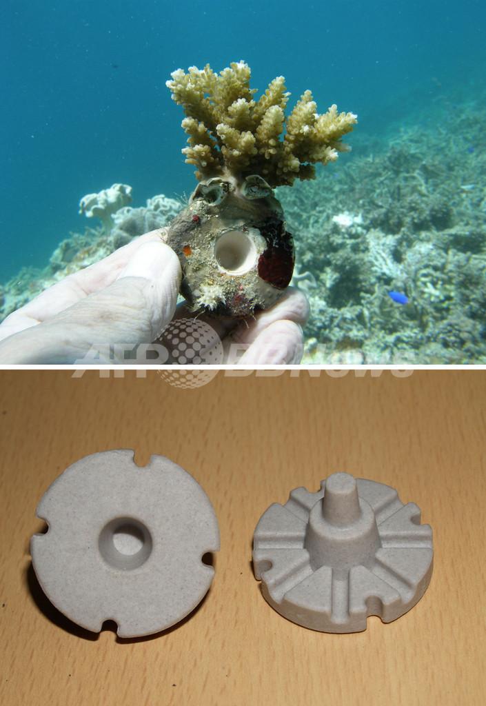 沖縄・石西礁湖のサンゴ礁、世界初の人工再生へ 東京海洋大