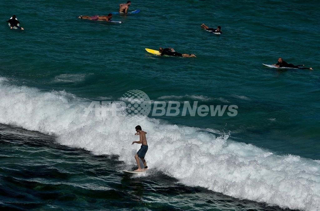 サーファーがクジラに一撃され失神、豪シドニーのビーチ