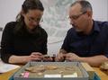 北極圏で350万年前のラクダ化石発見、カナダ