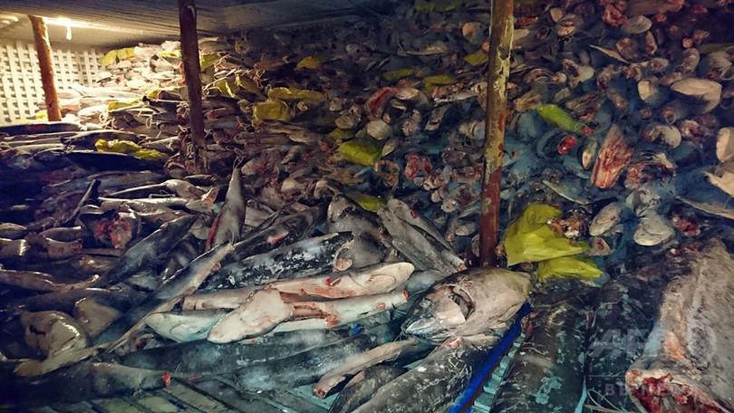 ガラパゴスで中国船籍漁船が密漁...