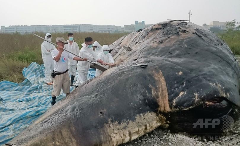 クジラ死骸の胃から大量のゴミ、台湾