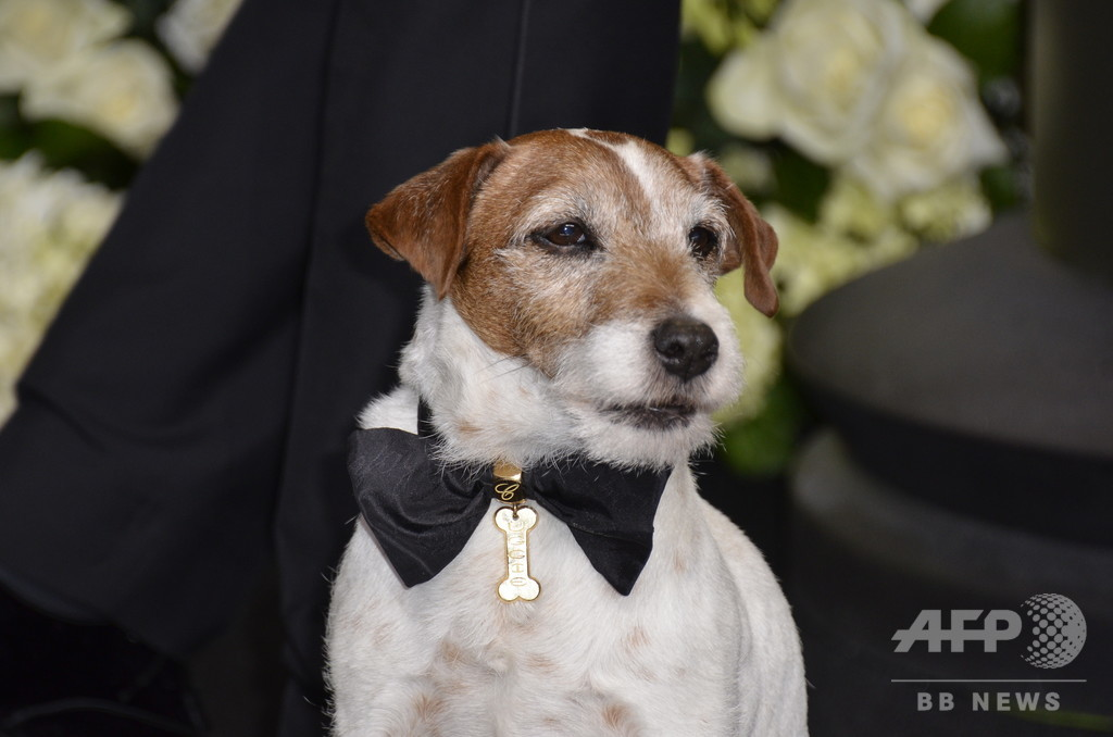 映画『アーティスト』出演犬、「パルム・ドッグの中のパルム・ドッグ賞」に選出
