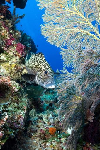 パラオ、「海の聖域法」を一部改定 沖縄の漁船を受け入れへ