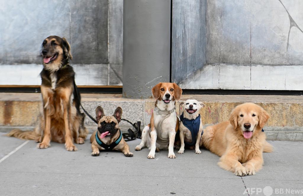 ゲノムで読み解く犬と人の歴史、氷河時代末には5犬種が存在した
