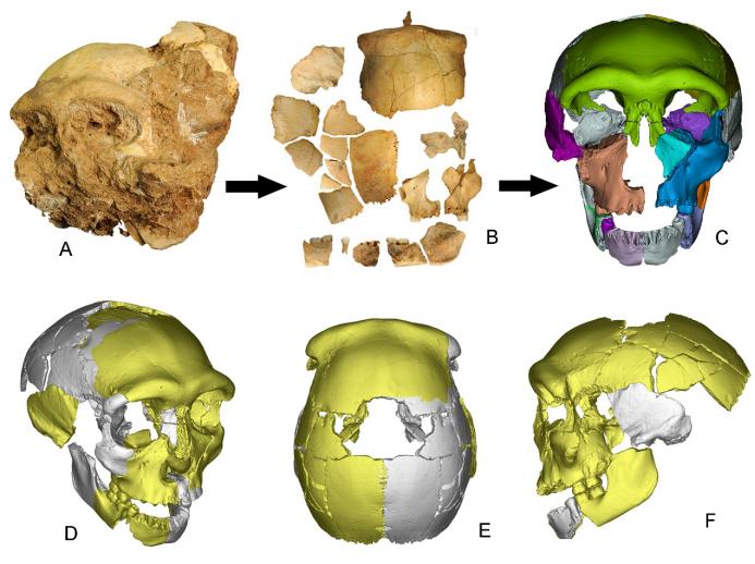 中国で30万年前の頭骨化石見つかる 東アジアの古人類の進化に新たな証拠