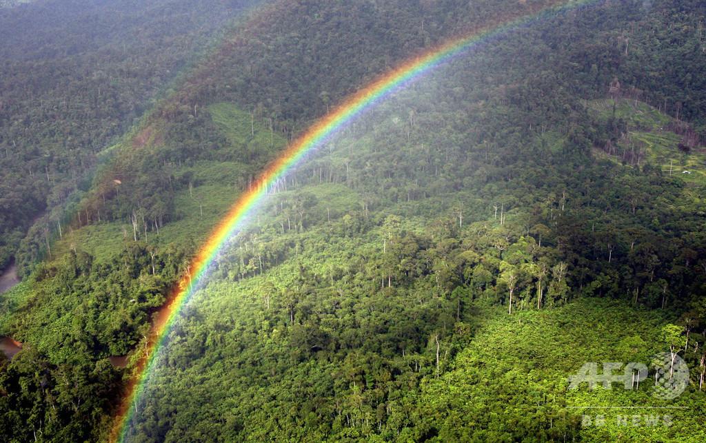 「適切な」生態系3割回復で、種の絶滅7割回避 研究
