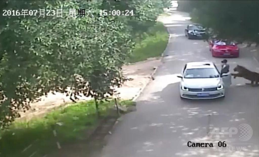 サファリパークでトラに襲われ女性1人死亡 中国